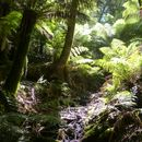 1# Ecology Walk in the Dandenong's's picture