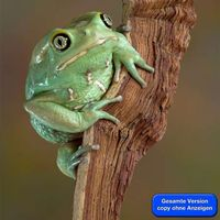 Stephan Schmitz's Photo