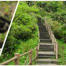 Mount Emei Hike's picture