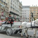 Free Walking Tour in Vienna (Español or English)'s picture