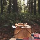 Picnic in Forest's picture
