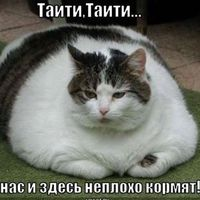 Mikhail Medvedev's Photo