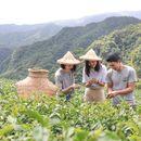 Tea Culture Tour 's picture