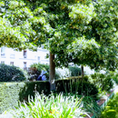 Visite De La Coulée Verte's picture