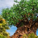 Visiting Disney's Animal Kingdom's picture