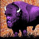 Qwister [ON TOUR] at THe Purple Buffalo / May 22 's picture