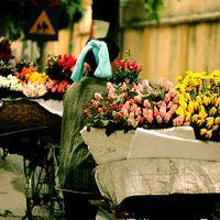 Vivian Nguyen's Photo