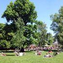 Frisbee im Clara Park's picture