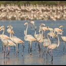 Bird 🐦 Watching in Mumbai's picture