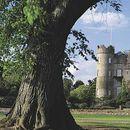 Castle Crawl's picture