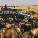 Masaai Mara Budget Safaris's picture
