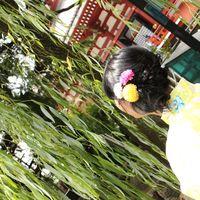 sakura uehara's Photo