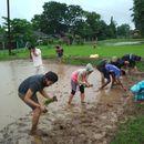 Rice Plantation Workshop's picture