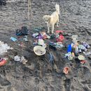 CS Beach Cleanup 's picture