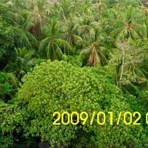 Woods Jungles's Photo