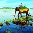 سفر به سریلانکا's picture