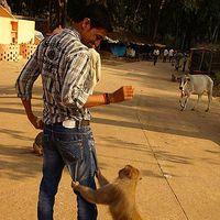 Yogendra  Thakur's Photo