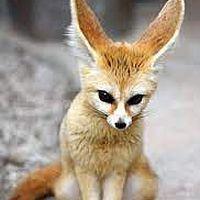 Tanii Fox's Photo