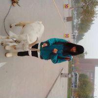 Jin Liang's Photo