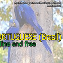 Learning Portuguese (Brazil)-ONLINE's picture