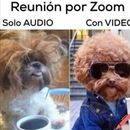 REUNION ZOOM's picture