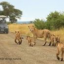 Fast Kruger Safari By Ourselves 's picture