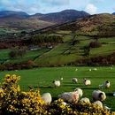 Friday CS Meeting - Open lesson about Ireland's picture