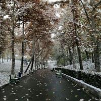farzad sedigh's Photo
