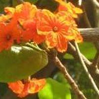 Jyoti Chauhan's Photo