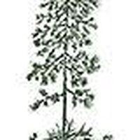 Whispering Pinepress's Photo