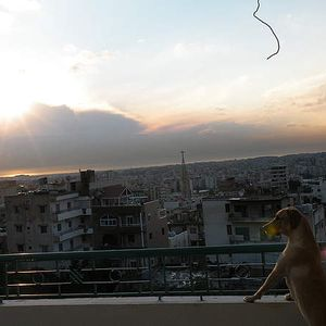 Home Ziade's Photo
