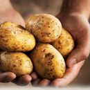 Potato Party - Monthly Cs meeting in Kaliningrad 's picture
