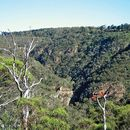 Hiking in Adelaide Hills's picture