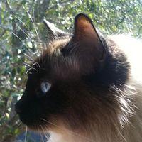 Mutsch Cat's Photo