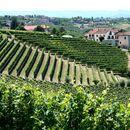 Free Wine Tour to Roero and Barolo/Barbaresco's picture