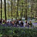 Bluebells walk in Woods的照片