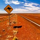 AUSTRALIAN ROADTRIP's picture