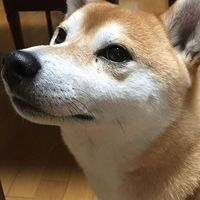 Yuki Ishii's Photo
