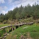 Caminata Reserva Forestal La García's picture