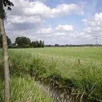 Andijvie Stampot boerderieje's Photo