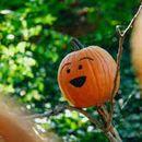 Halloween Spooky Meetup's picture
