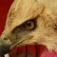 Photos de Patología Fauna