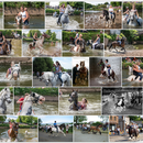 Appleby Horse Fair Trip's picture
