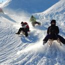 Sledging in Alps's picture