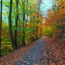 Bilder von Hiking at Nierenhof