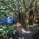 Jardín Canario's picture