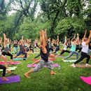 YOGA In The Park! *Pay As You Feel* MELBOURNE's picture