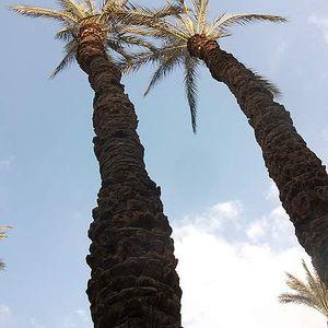 aemad Alkhtib's Photo