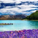 8-day tour of NZ South Island's picture