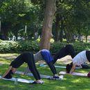 Park Yoga's picture